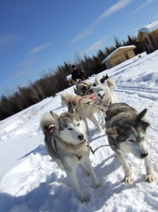 husky snow ride