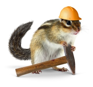 Funny chipmunk builder, reconstruction worker concept